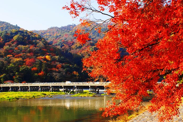 SONY DSC 僕自身秋は好きなので、早く秋になって欲しいですww  《